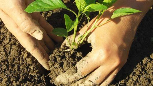 cura+del+suolo+orto