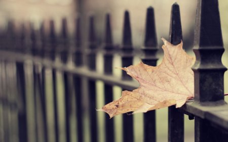 202951__close-up-wallpaper-autumn-autumn-wallpaper-leaves-leaf-wallpapers-leaves-wallpapers_p