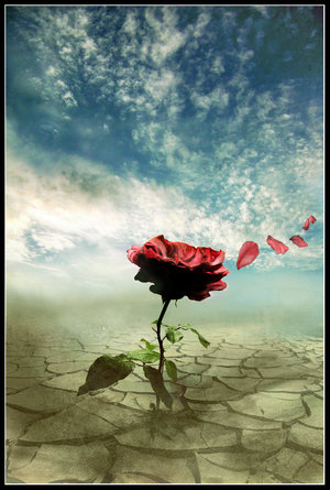 A_rose_in_the_wind_by_FrozenStarRo-m