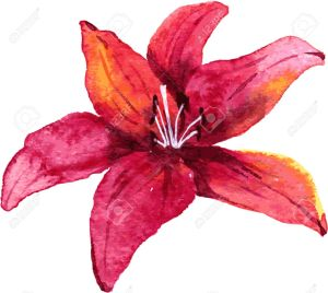Red lily flower drawing by watercolor, hand drawn vector illustration
